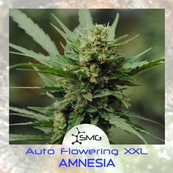 smg auto xxl amnesia2