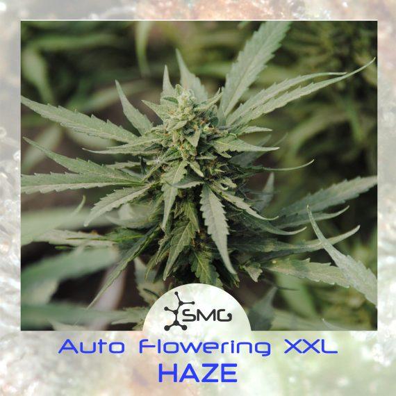 smg auto xxl haze3