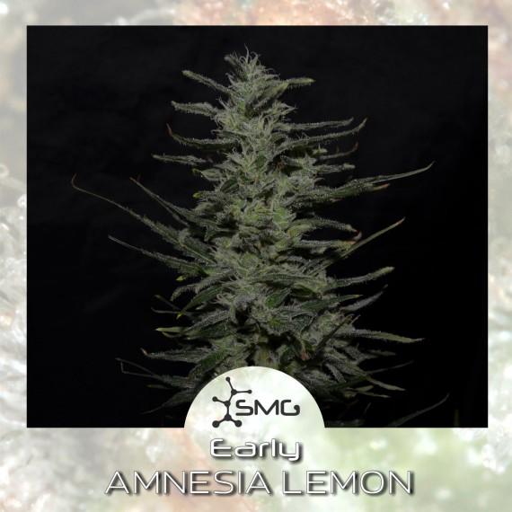 smg early amnesia lemon
