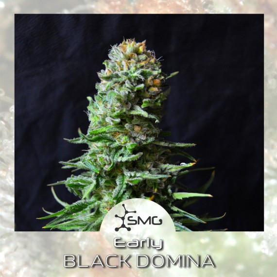 smg early black domina