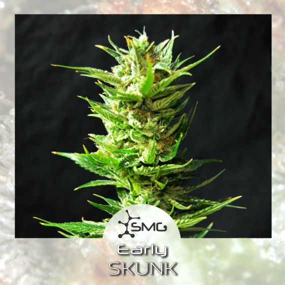 smg early skunk
